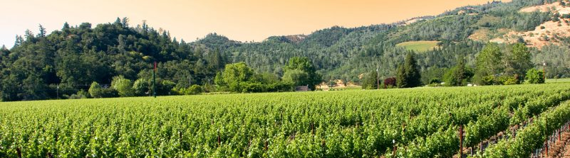 Winery/Vineyard | Commercial Appraisal | Commercial